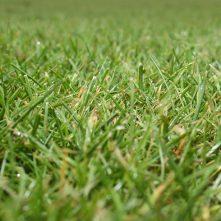 Turf & Grass Seed