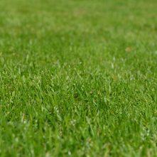 Lawn-Grass-Seed-Dorchester-Dorset